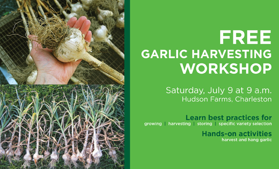 West Virginia State University Extension Service Sponsoring Garlic Workshop July 9
