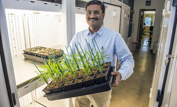 WVSU Receives $300,000 National Science Foundation Grant for Bioenergy Research