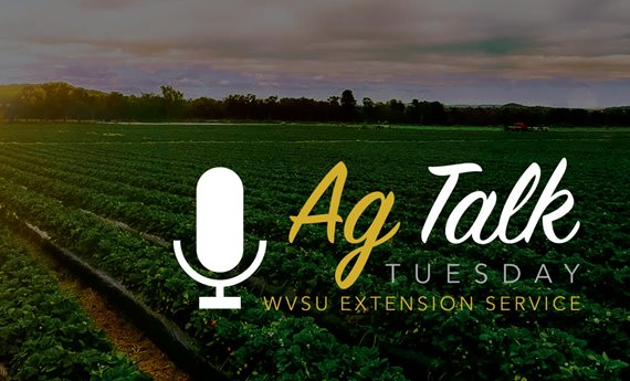 West Virginia State University Extension Service Launches Live Agricultural Q&A Series